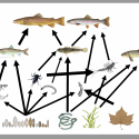 Graphic of a food web from the presentation