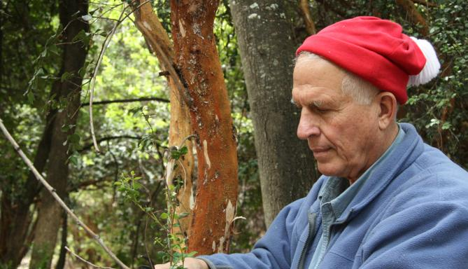 Gary Strobel found diesel-producing fungus in this Patagonia rainforest. (Photo courtesy of Gary Strobel) - MSU News Service